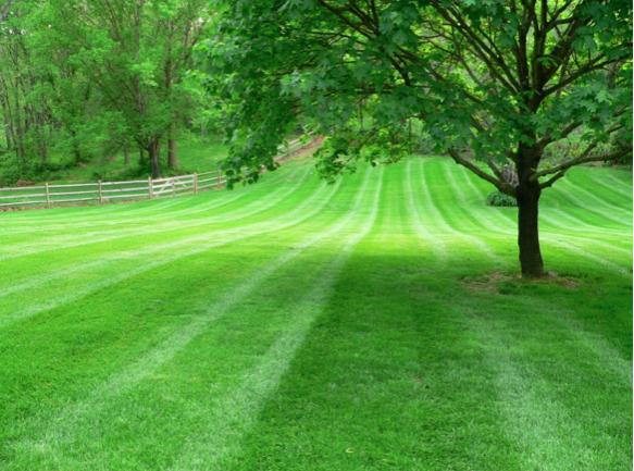 Vejos/žolės pjovimas, aplinkos tvarkymo darbai